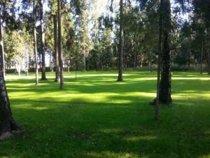 озеленение на рублевке
